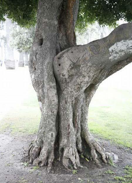 Comment se reproduisent les arbres? (classé X) 494194ATT00001