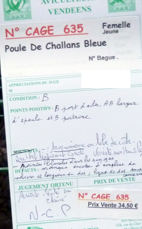 poule - Poule de Challans - standard 498033P1110988