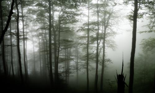 Forêt de Nuage