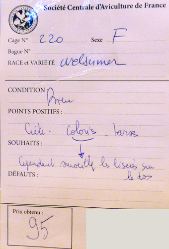 2014 - salon de l'Aviculture de Paris du 22/02/2014 au 02/03/214 - Page 4 500285P1130542