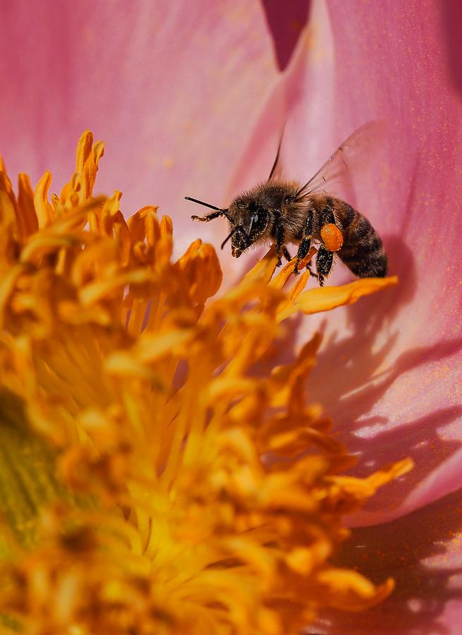 petites abeilles / test OM10 501412O040318