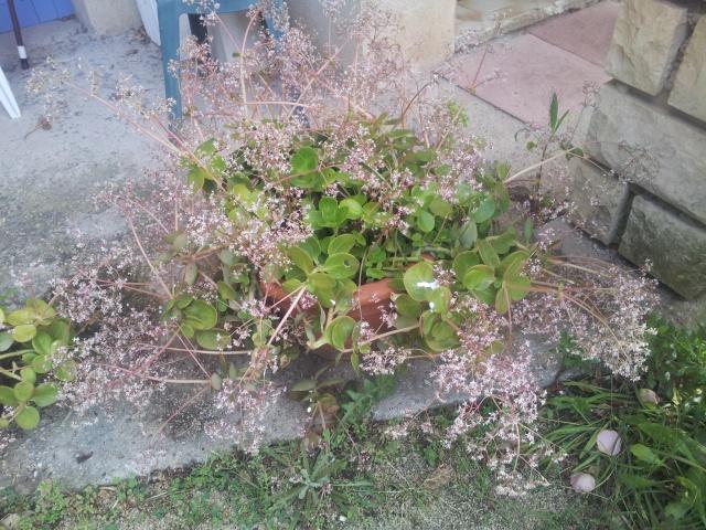 une plante grasse en fleurs 50187420170503083823