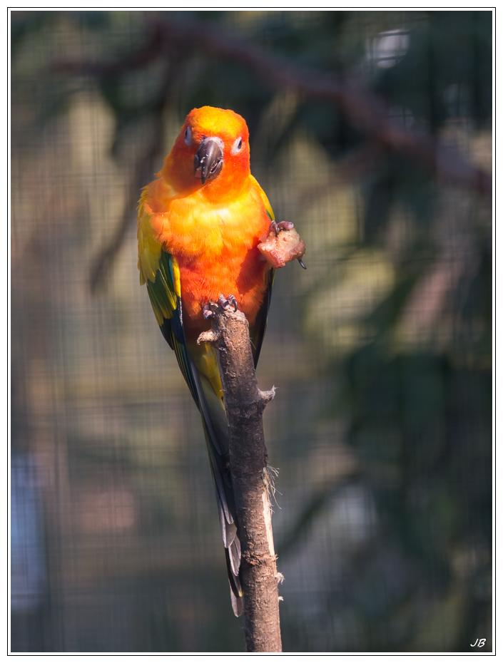 Zoo de Beauval : les oiseaux 502318LR53P1140006