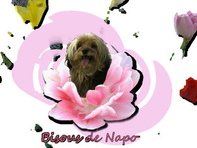 bonjour 503282BisousdeNapopluspetit