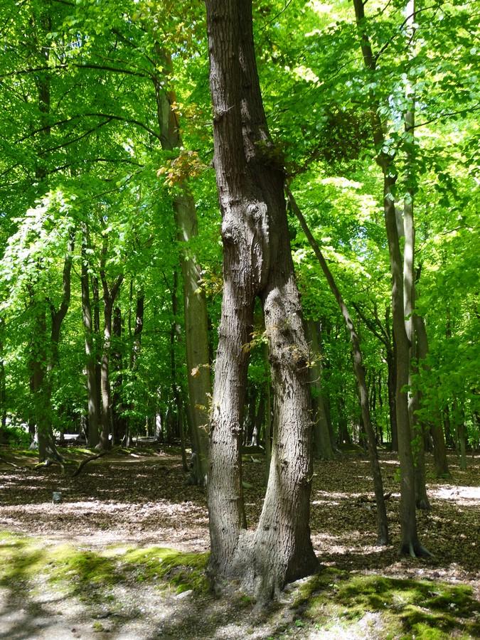 [fil ouvert] la forêt dans tous ses états - Page 14 503329016Copier
