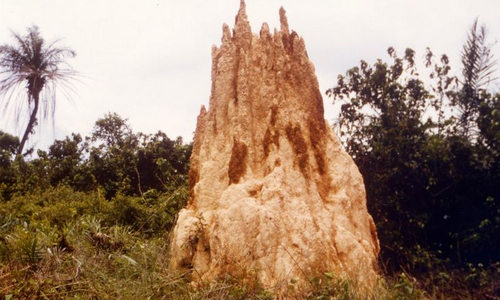 Royaume des Termites