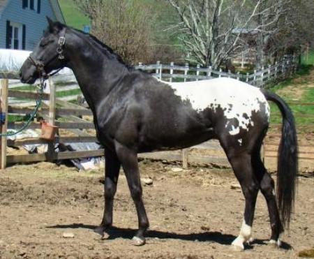 Talisman Horses, les news 508556wapuzzan