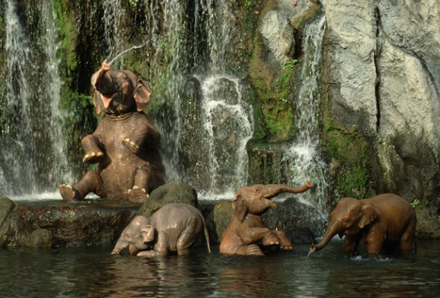 [Tokyo Disneyland] Jungle Cruise : Wildlife Expeditions (8 septembre 2014) 509229jcwe1