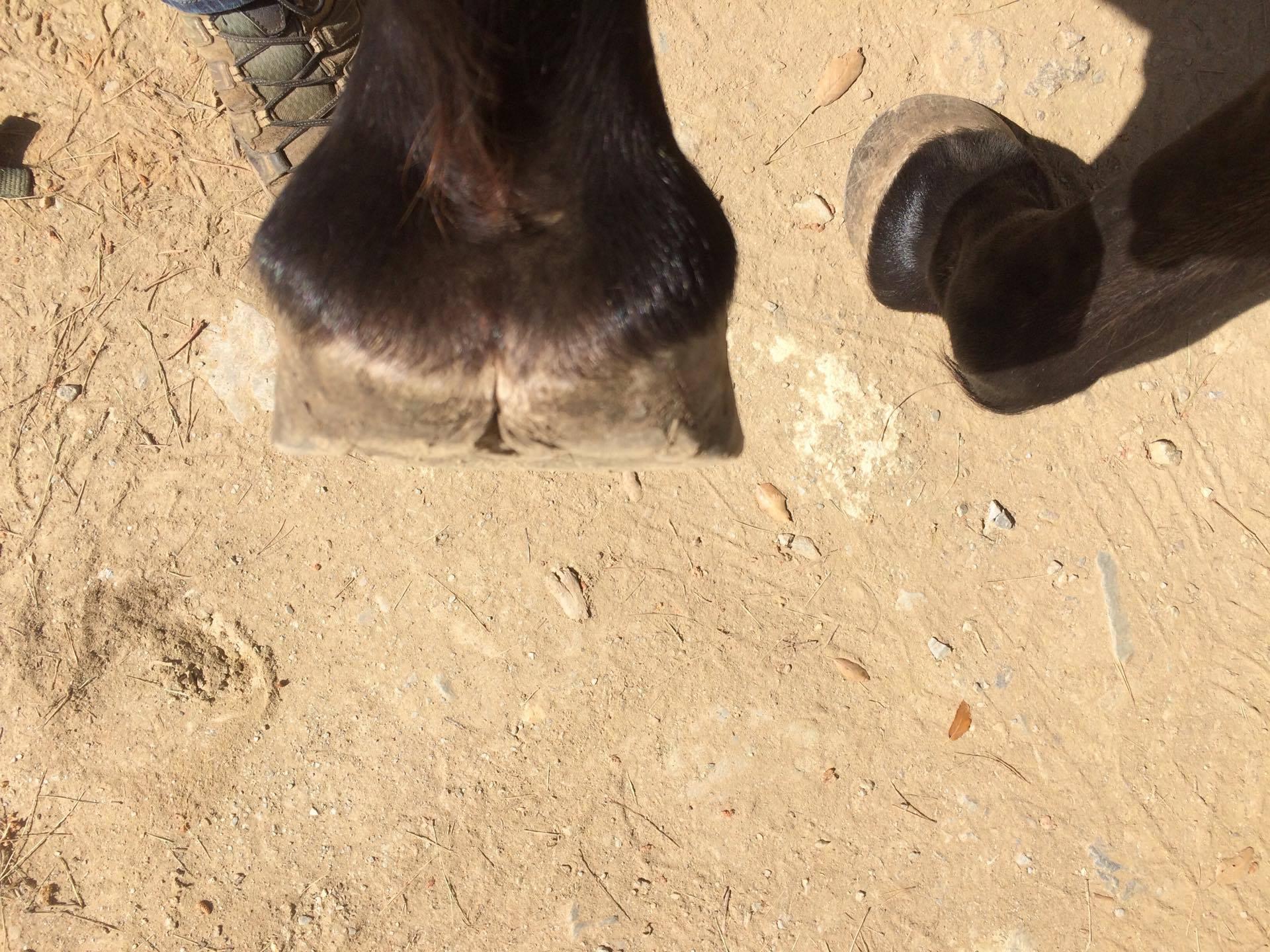 besoin d'avis sur les pieds de mon cheval - Page 2 513557mariekennel2