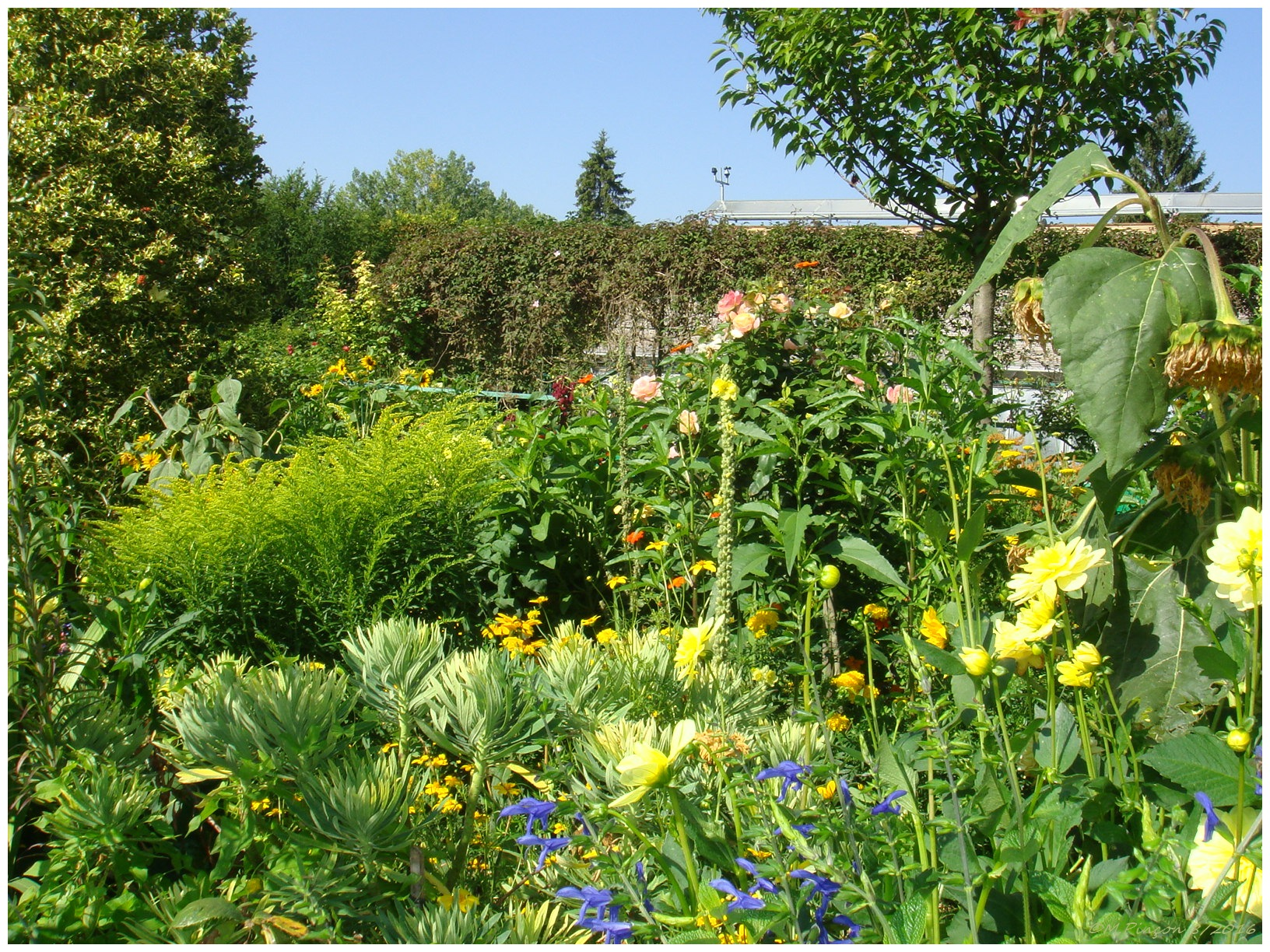 """GIVERNY"" chez Claude MONET 515260DSC010872"