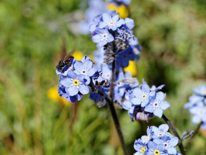 Flore et insectes de Vanoise 516698LacduPysColdelIseran019DxO800x600