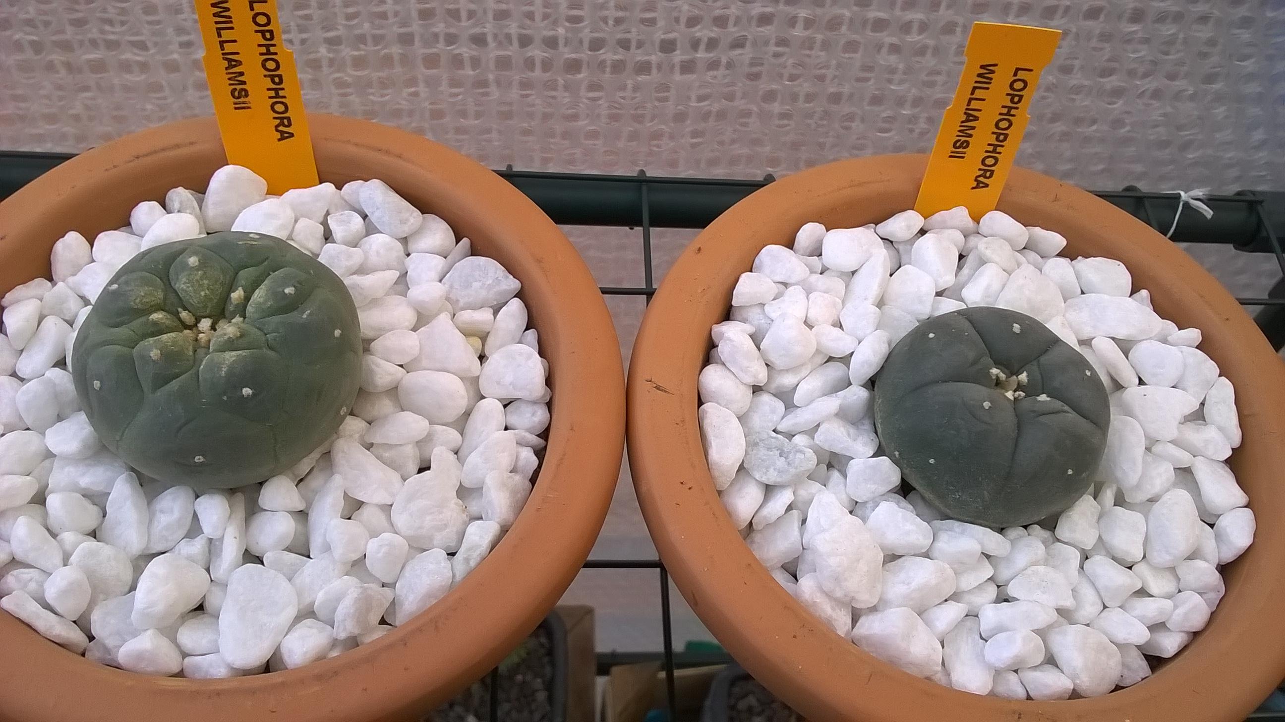 Les cactus de Digitaline 520112WP20151122153417Pro