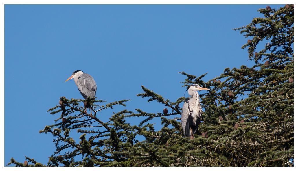 Zoo de Beauval : les oiseaux 520482LR53P1130991