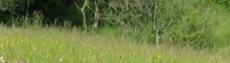 Prairie du Soleil