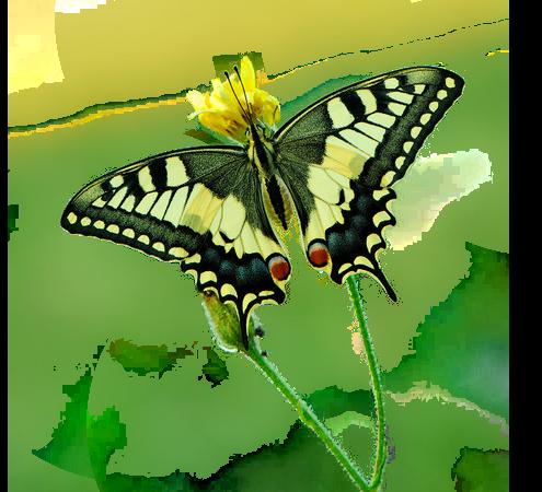 Tubes Papillon 522211Melgibson4e6