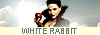 HAVE YOU SEEN A WHITE RABBIT 522342LOGO2