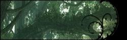 La Forêt des Perdus