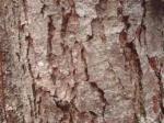 Partie Guérisseur : Les plantes de la Forêt 524020corcedaulne