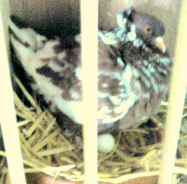 L'élevage alexandre girard. 526223IMG20150424140056
