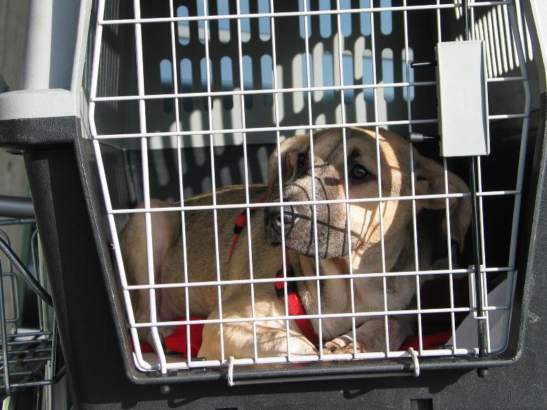 Lila, adorable chienne croisée, née en octobre 2011 527817IMG7977