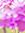 créer un forum : Test de H&V 528752Sanstitre12