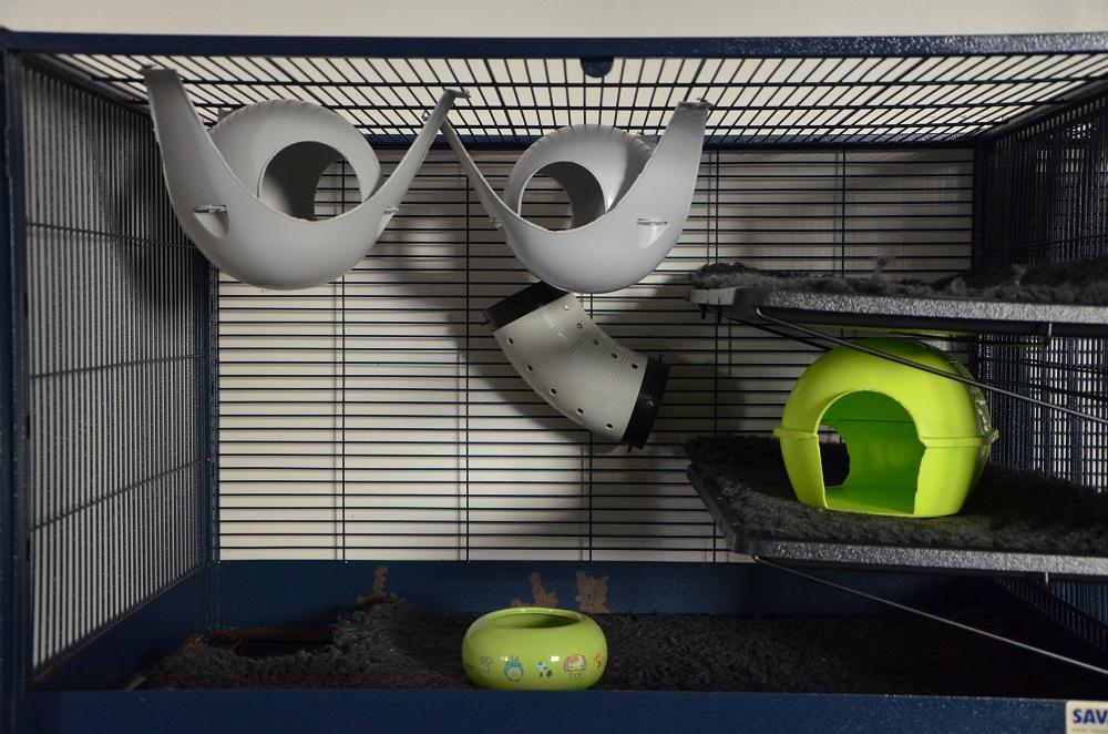Photos de vos cages - Page 3 533224Royalsuite404