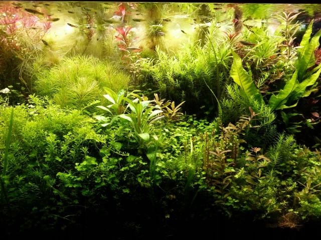 Mes (plus) de 60 plantes dans mon 240 litres - Page 3 53827320140412065513