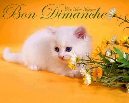 Bonjour bonsoir,...blabla Aout 2013 - Page 10 53925352557010