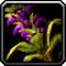 Les vertus des plantes, tome II : Compagnon 539903Invmischerb03