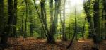 Forêt aux Cavalcades