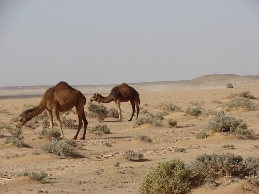 retour maroc avril 2013 542865032