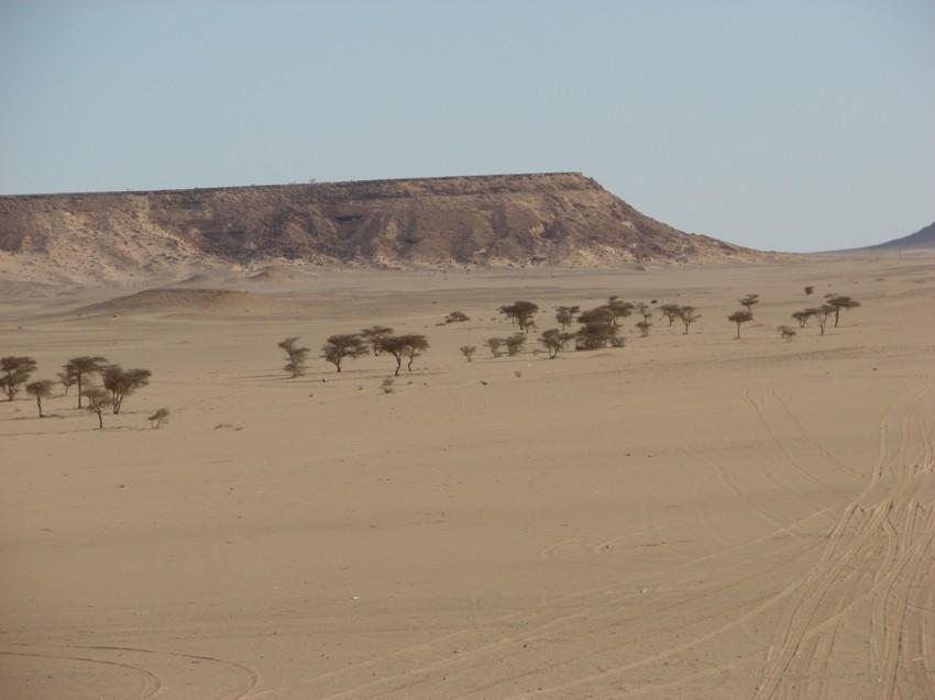 Le Grand Sud du Maroc - II 545929054