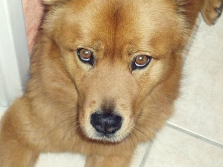 Je vous présente mon chien et mon chat ^^ 5470188