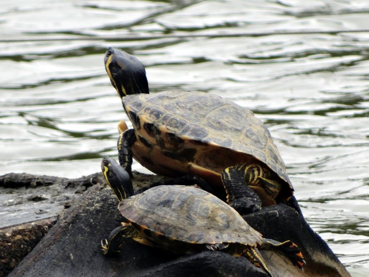 [Fil ouvert à tous] Reptiles, serpents, tortues, amphibiens, ... 547226034Copier