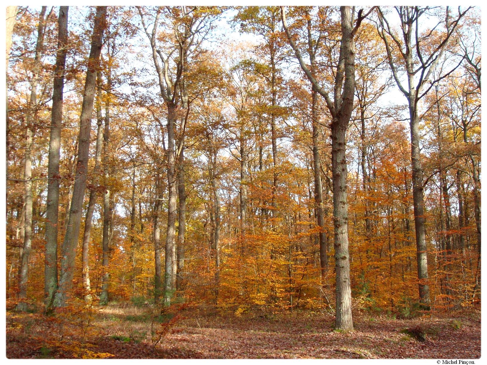 [fil ouvert] la forêt dans tous ses états - Page 17 555723DSC014386