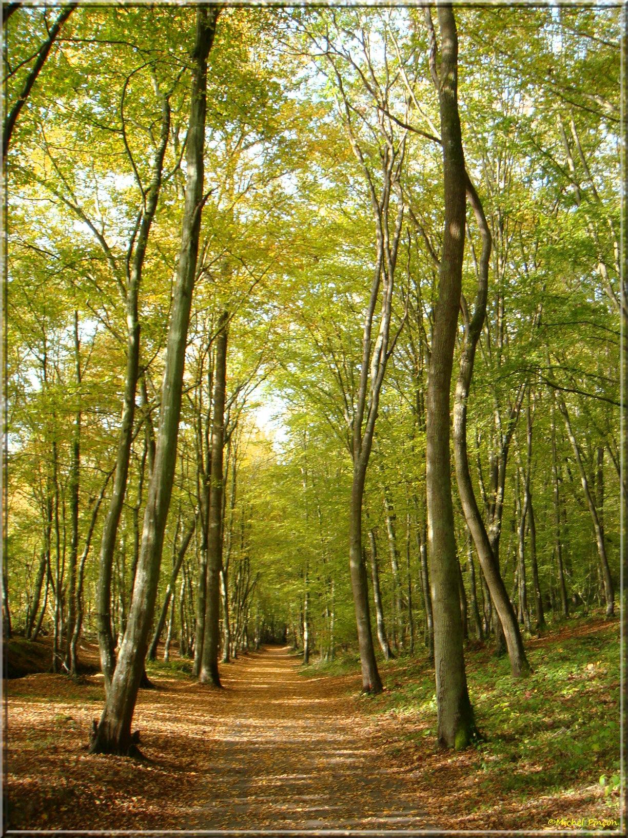[fil ouvert] la forêt dans tous ses états - Page 15 560876DSC014034