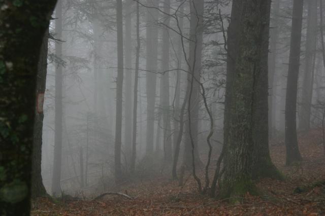 Dans la brume éléctrique sans gibier à l'horizon... 561602IMG4582