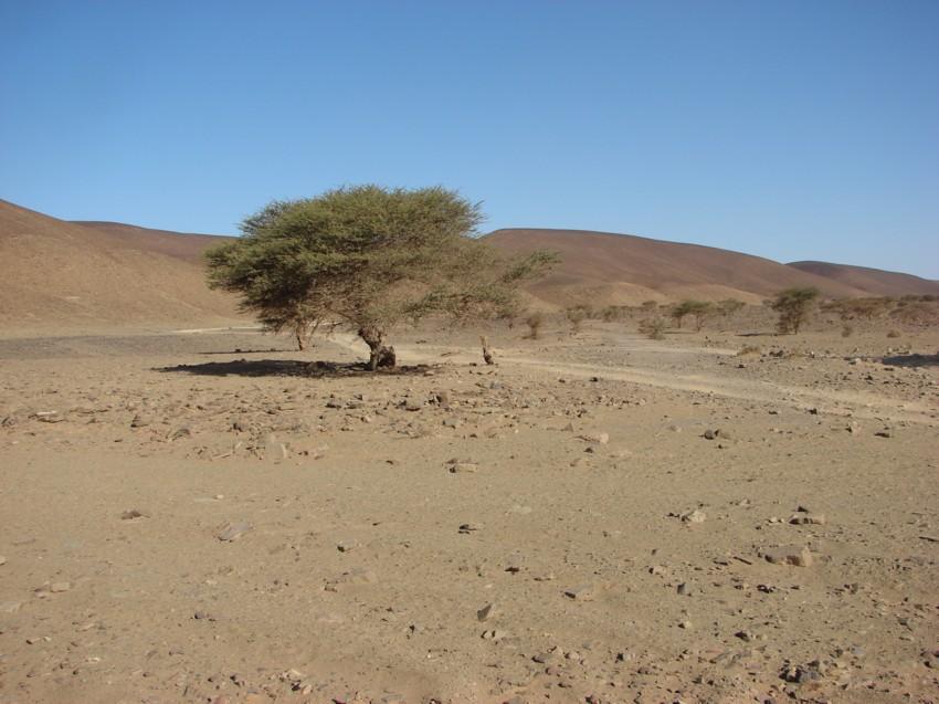 Le Grand Sud du Maroc - II 563151083
