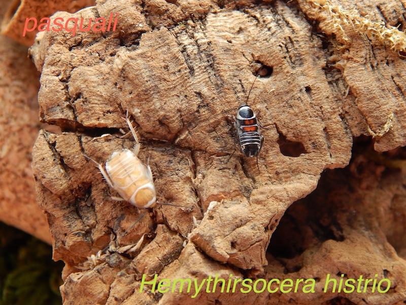 Quelques blattes. 563347DSCN1626