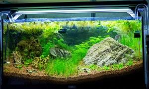 L'aquarium de Nouméa [Nouvelle Calédonie] + Baleines! 566584aqua29091Copie