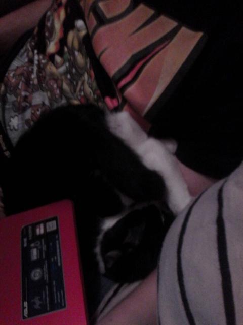 Joël, chaton type européen noir et blanc, né le 25/06/2014  567730IMG20141017202524