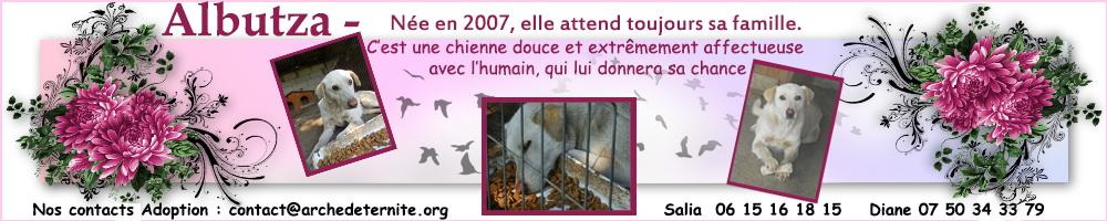 TIMIDUTZA FEMELLE  NEE EN 2006 - parrainée par Nathalie Gamblin - R-SC -FB-SOS-AS - Page 2 569224bannirealbutza