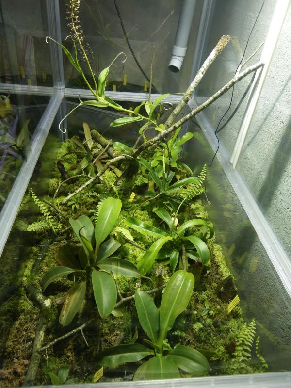 Mon terrarium highland 569257IMGP1832