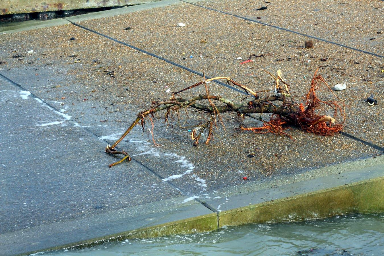 Après la tempête 570016063Copier