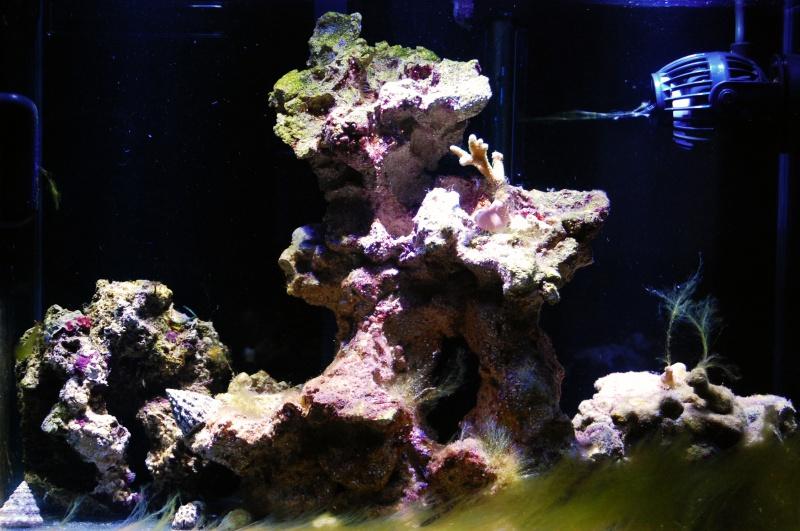 Nano Reef 30l 573014DSC0170m