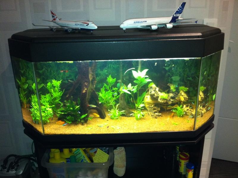 Besoin d 39 aide r alisation d 39 un couvercle en bois for Couvercle pour aquarium