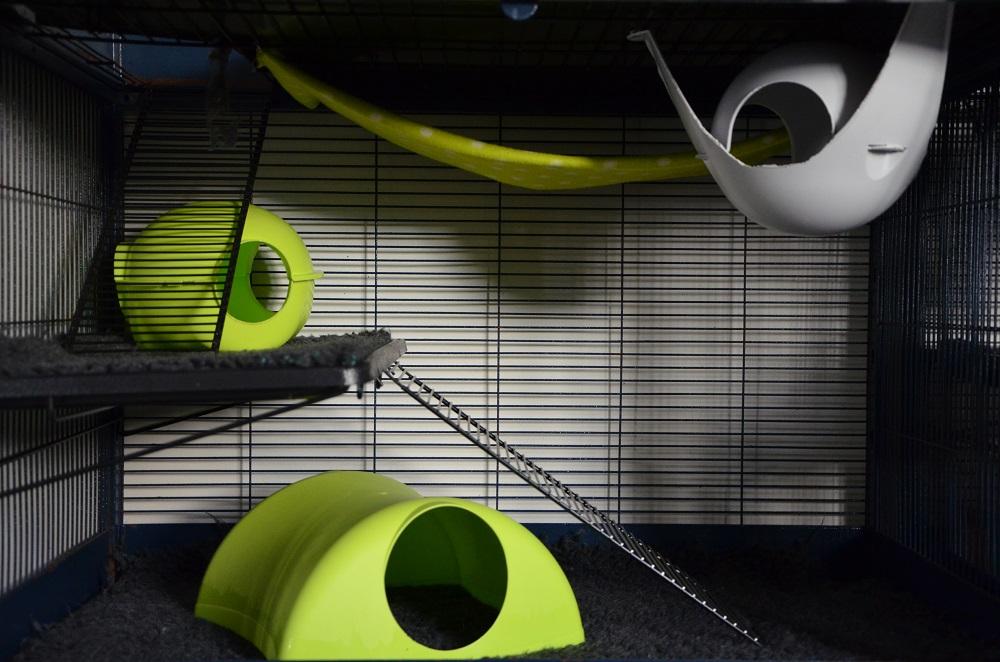 Photos de vos cages - Page 3 575305Royalsuite405