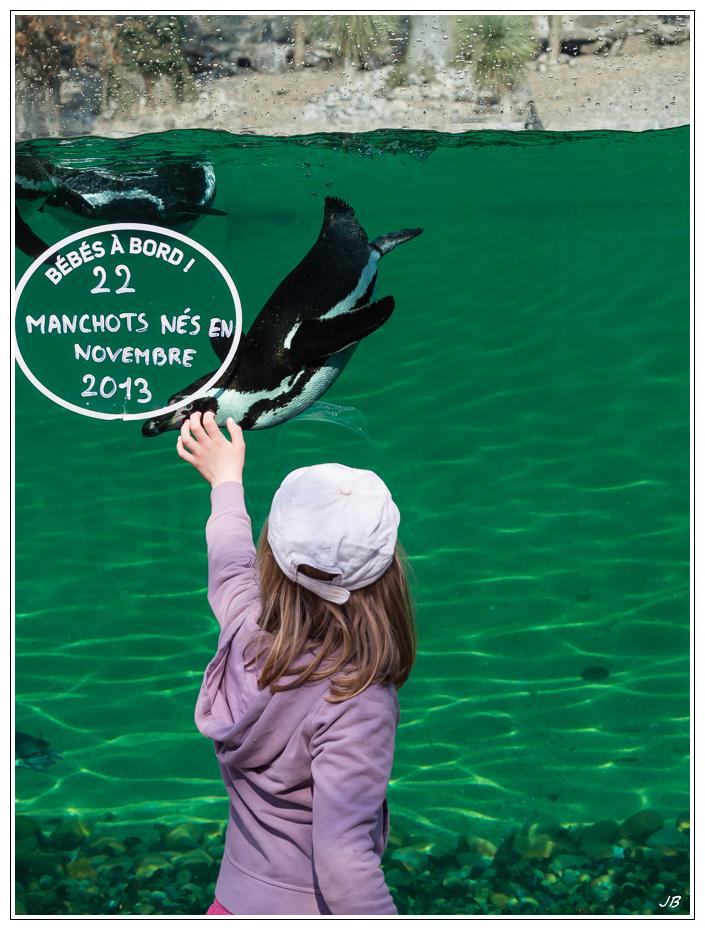 Zoo de Beauval : les oiseaux 578036LR53P3130326