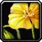 Les vertus des plantes, tome II : Compagnon 578070Invmiscflower01