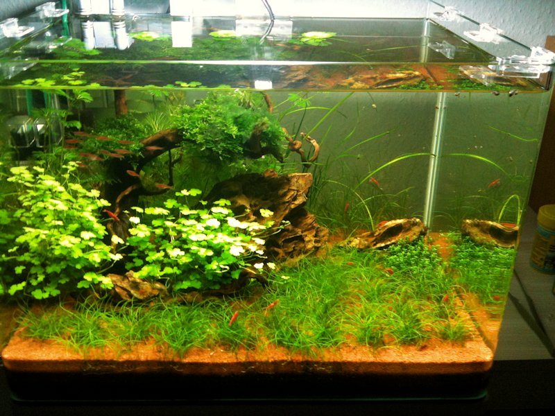 Mon Scaper's Tank 50L Aquascaping - Page 2 583517IMG0386